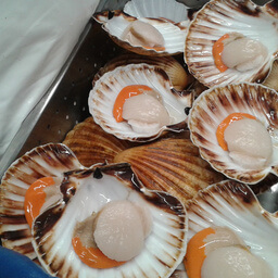 Scallop Dive Caught 200 G