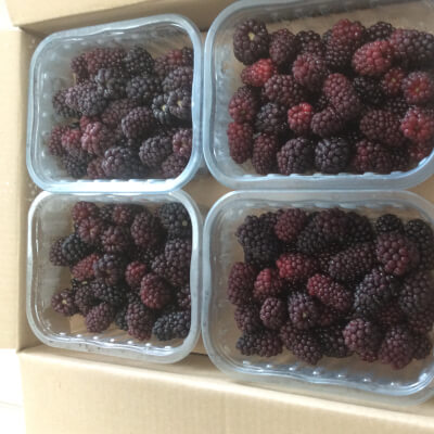 Frozen Blackberries In Punnets