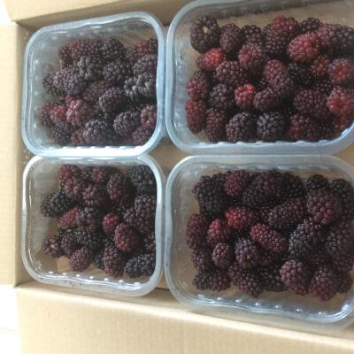 Frozen Blackberries In Punnets