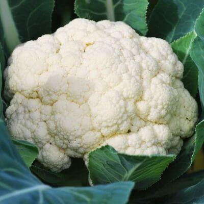 Organic Cauliflower Grown In Cornwall