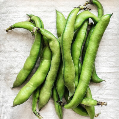 Organic Broad Beans Grown In Somerset