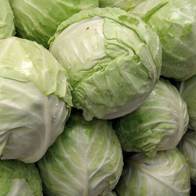 Organic White Cabbage Grown In The U.K.