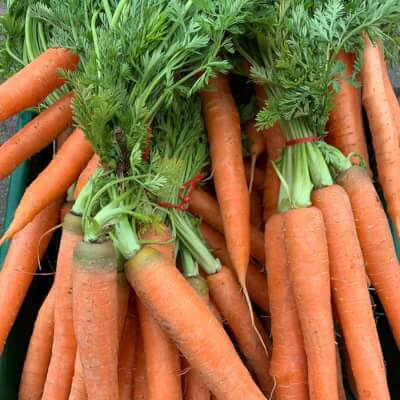 Organic Bunched Carrots Grown In Somerset