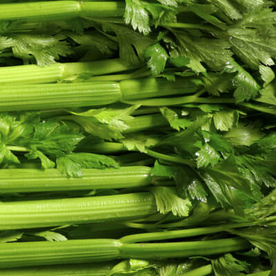 Organic Celery Grown In Somerset