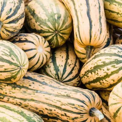 Organic Delicata Squash Grown In Somerset