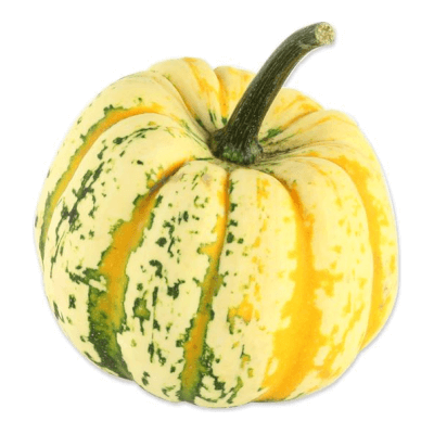Organic Celebration Squash Grown In Somerset