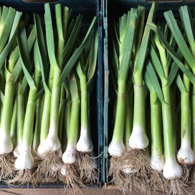 Fresh Garlic Grown At Vallis Veg