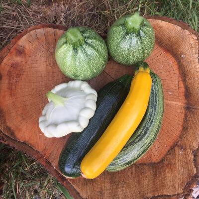 Courgette Grown At Vallis Veg