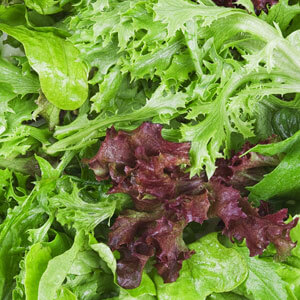 Organic Mixed Winter Salad Grown In Wiltshire