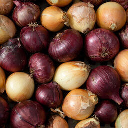 Onions Organic Grown In UK