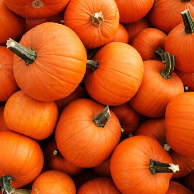 Organic Pumpkin Grown In Somerset