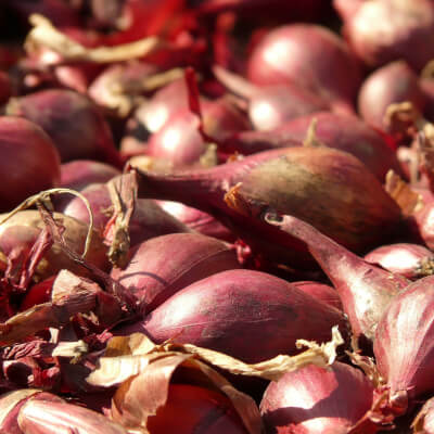 Organic Shallots Grown In Somerset