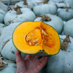 Squash Crown Prince Grown At Vallis Veg