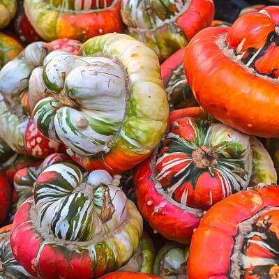 Organic Turban Squash Grown In Somerset