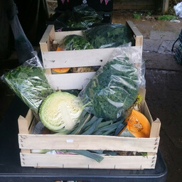 Vegetable Box Medium