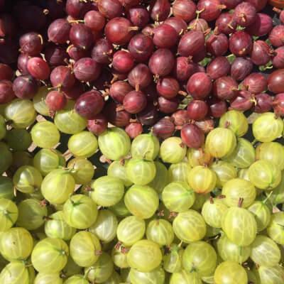 Gooseberries Grown At Vallis Veg