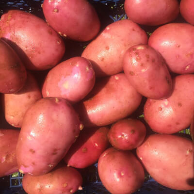 Potatoes Grown At Vallis Veg