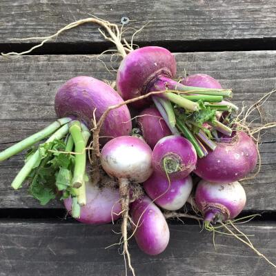 Summer Turnips Grown At Vallis Veg