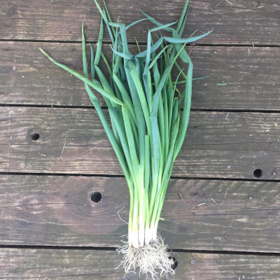 Spring Onions Grown At Vallis Veg