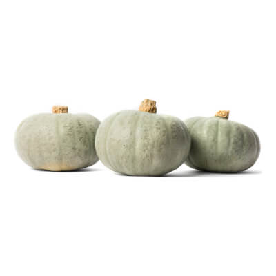 Organic Winter Sweet Squash Grown In Somerset