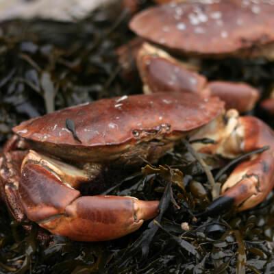 Box Of 2 Crabs