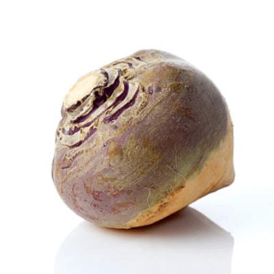 New Season Turnip