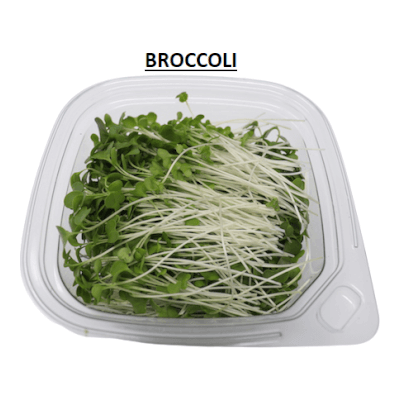 Microgreens - Broccoli Shoots