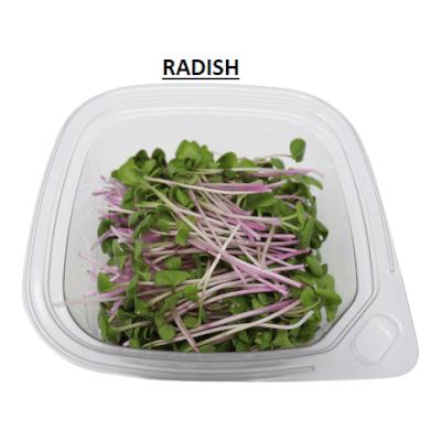 Microgreen - Radishshoots