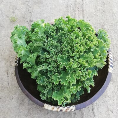 Green Curly Kale 250G