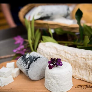 ST TOLA GOAT CHEESE
