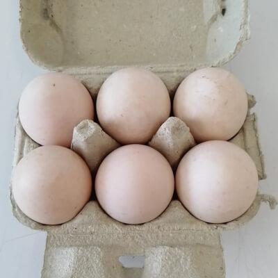 6 Derbyshire Yolk Duck Eggs