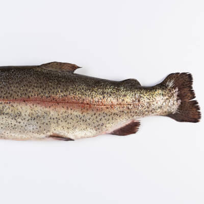 Gutted Whole Large Trout