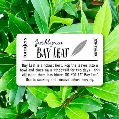 Bay Leaf (Freshly Cut)