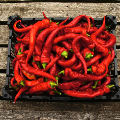 Ohnivec Chillies (Medium - Hot)