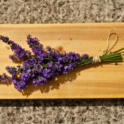 Lavender (Freshly Cut)