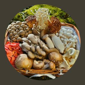Fancy Fungi Gourmet Mushrooms