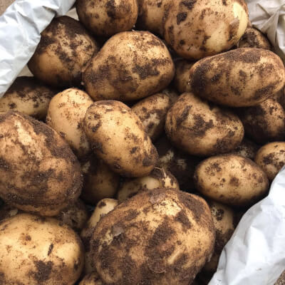 Cultra Potatoes From Nethermyres Farm 5Kg