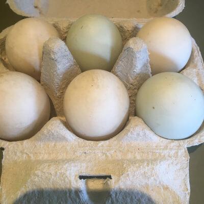 6 Free Range Duck Eggs