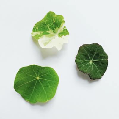 Baby Mixed Nasturtium Leaves