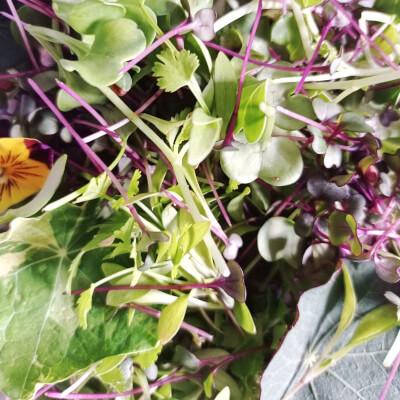 No Coriander Micro Salad Mix