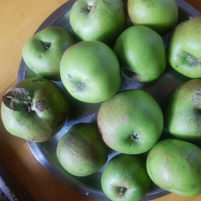 Cooking Apples - Chemical Free
