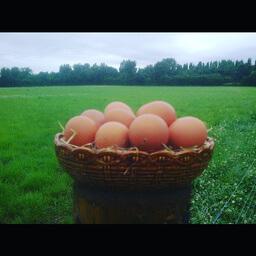 Organic Free Range Eggs X 6