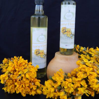 Gorse Flower Cordial