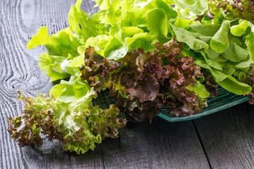 Organic Lettuce (Oakleaf Green)