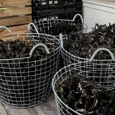 100Grams (X2) Of Organic Seaweed Fertiliser