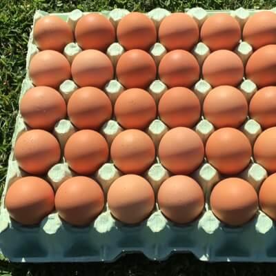 30  Free Range Eggs (Mixed Sizes)