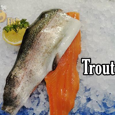 Trout Fillets
