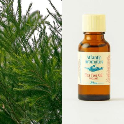 Tea Tree Oil (Organic)