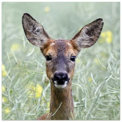 Greeting Card - Suitable For All Occasions (Deer)