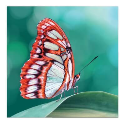 Greeting Card - Butterfly On Leaf